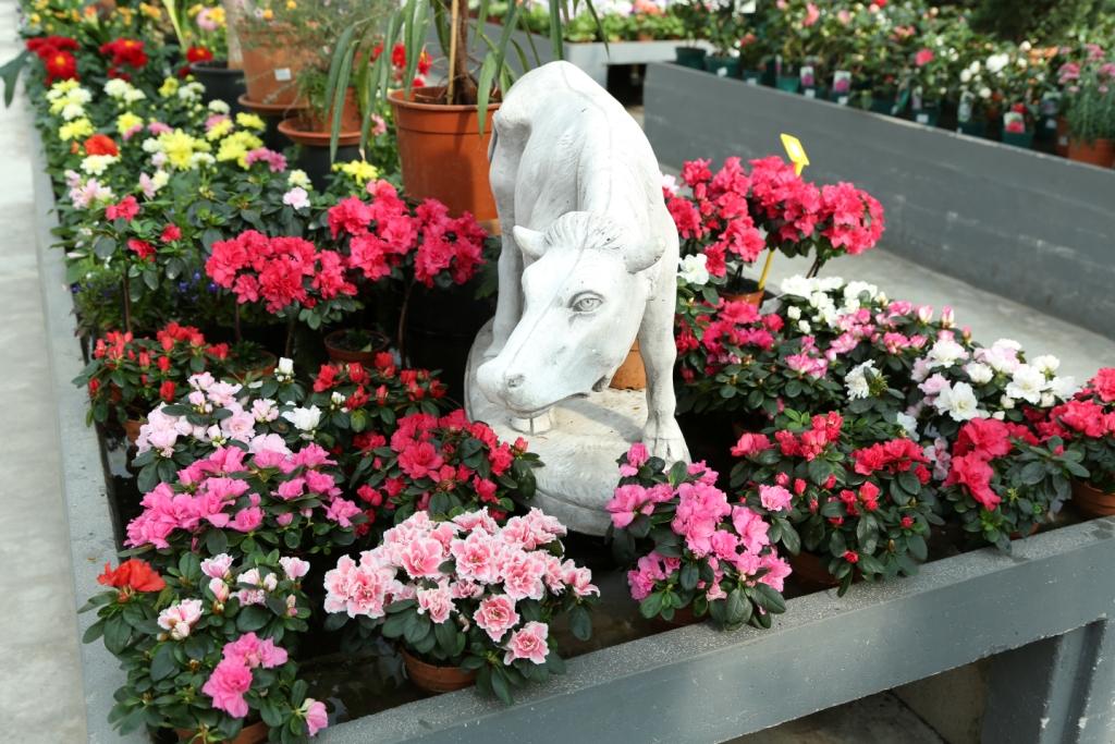 Cuidados de la azalea blog viveros la dama for Viveros y plantas