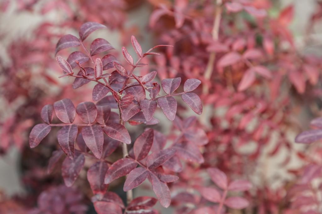 Arbustos de hoja caduca blog viveros la dama for Arbustos de hoja caduca