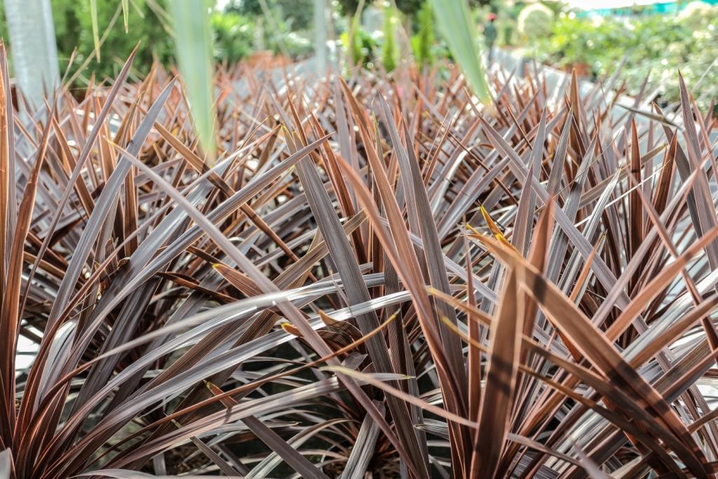 Plantas de exterior resistentes al frio y calor en las - Plantas de exterior resistentes al frio ...