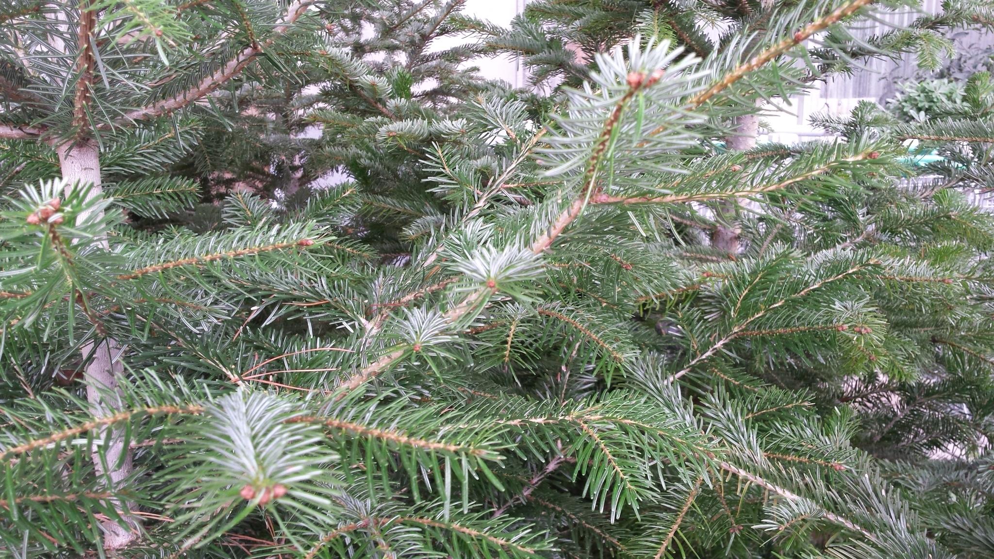 Como poner el arbol de navidad luces de navidad espiral - Como poner el arbol de navidad ...